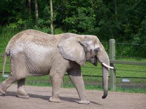 1345334_elephant